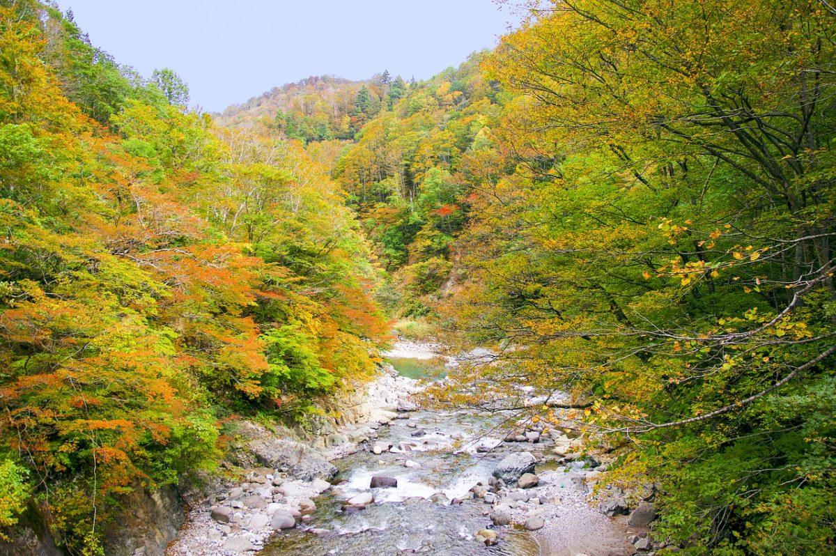 官民の努力によって渓魚が守られる自然渓流