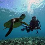 ダイビングを始める前のQ&A【ダイビングと水中環境編】