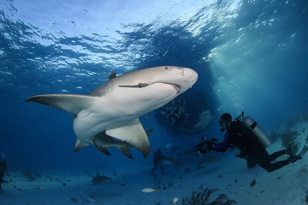 ダビング中の海の危険生物