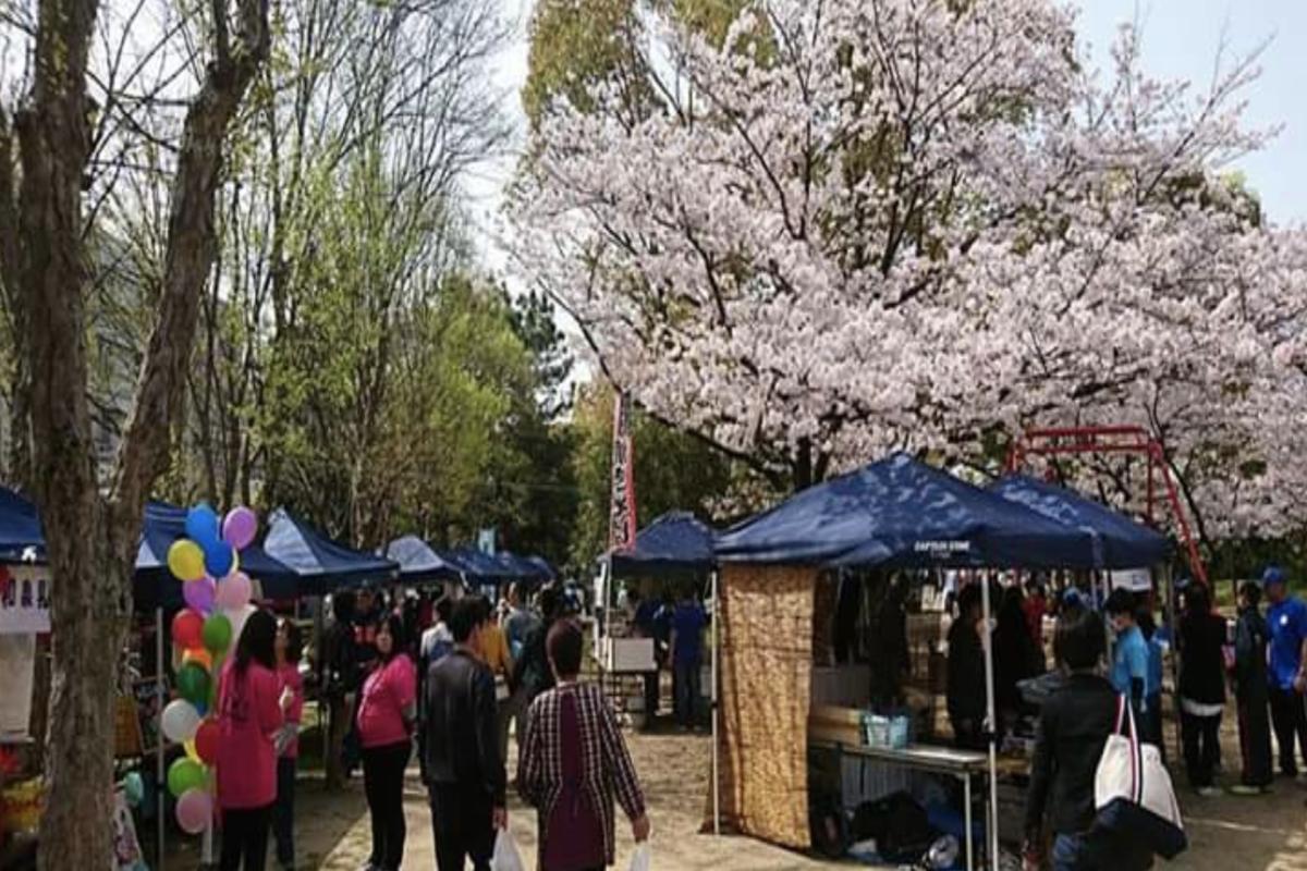 助松公園さくら 助松プール 大阪