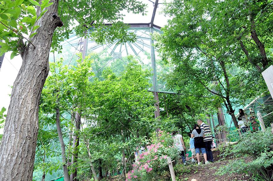 長野県佐久市で国内最大級「カブトムシドーム」