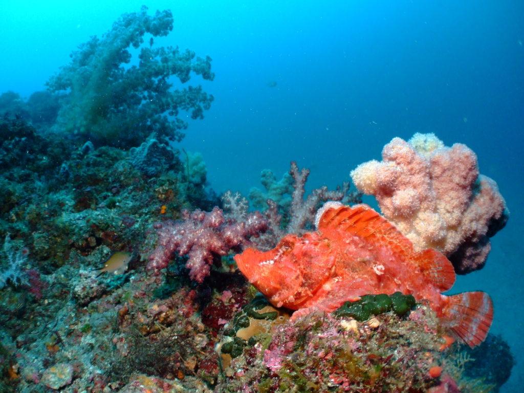 伊豆諸島のおすすめダイビングスポット