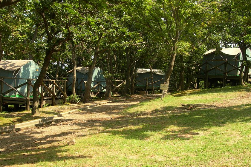サドイチ キャンプ