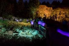 六甲高山植物園 夜の紅葉散策