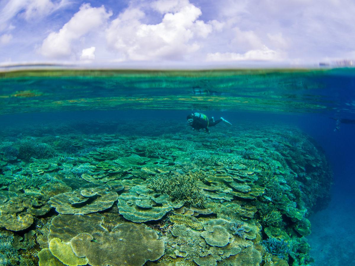 ダイビング 伊平屋島