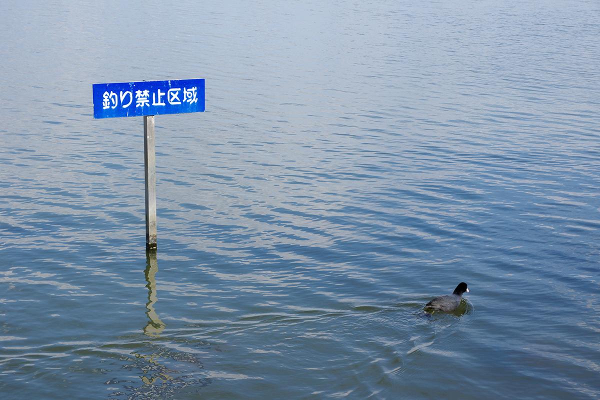 秋 鮭釣り