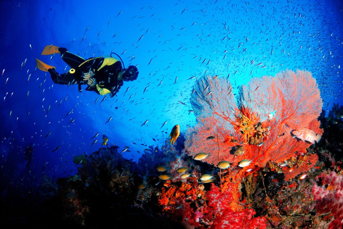 ダイビング タイ