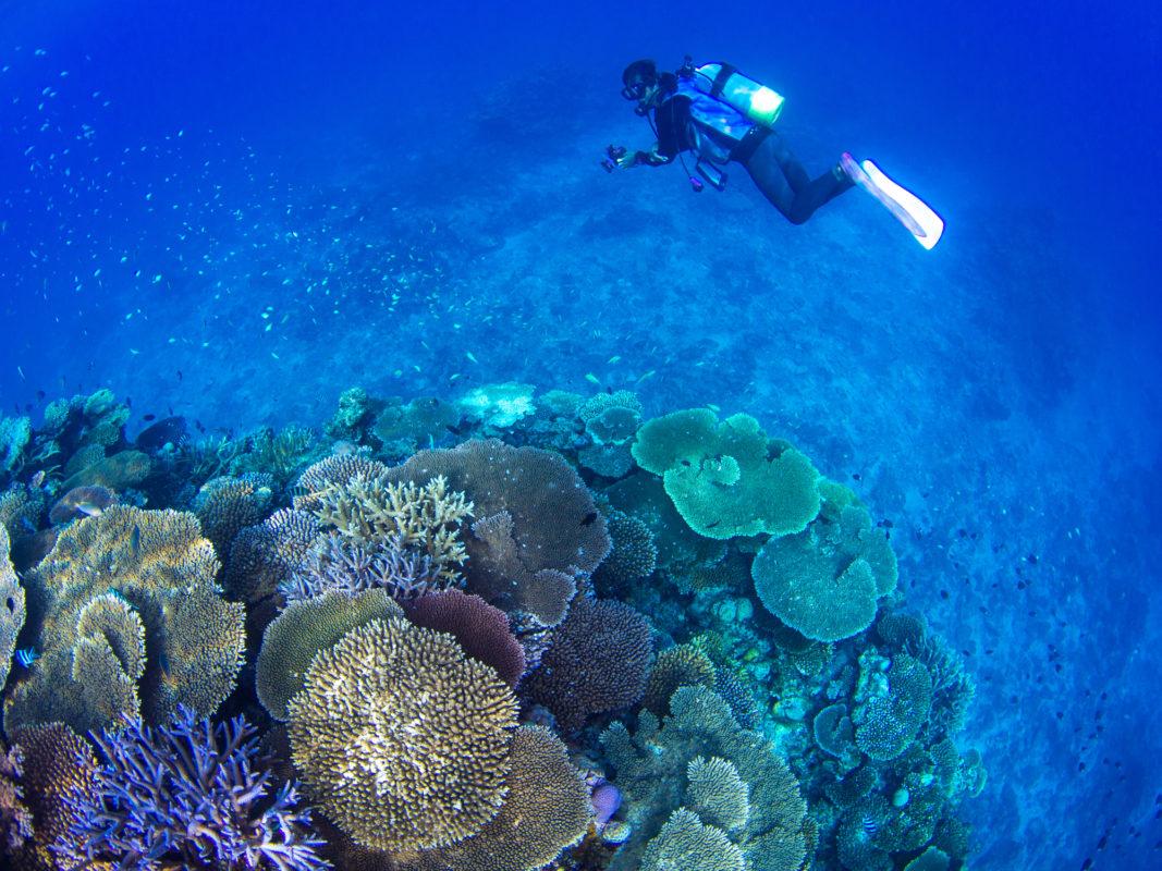 【保存版】沖縄の海に潜ろう!伊是名島のおすすめダイビングポイント