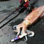 大人気のイカ釣り!イカ釣りのタックルと仕掛けや適切な保存方法を解説