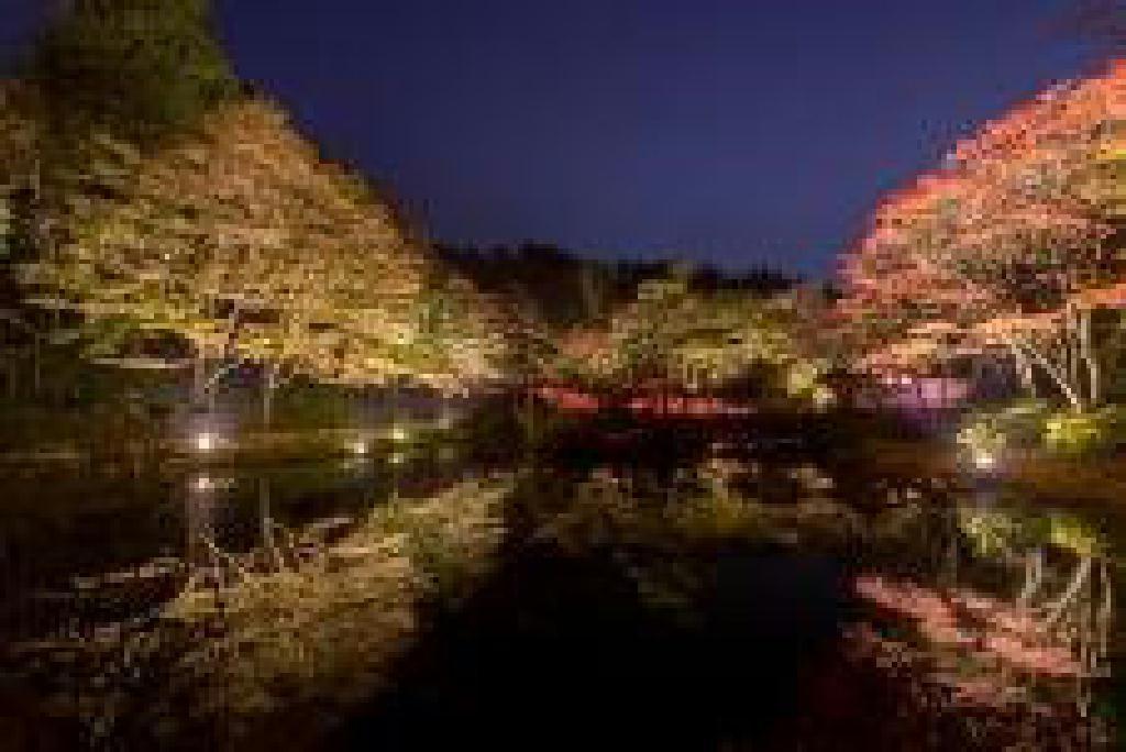 ライトアップされた紅葉とアートを楽しむ 六甲高山植物園 夜の紅葉散策 10月18日(金)~11月24日(日)