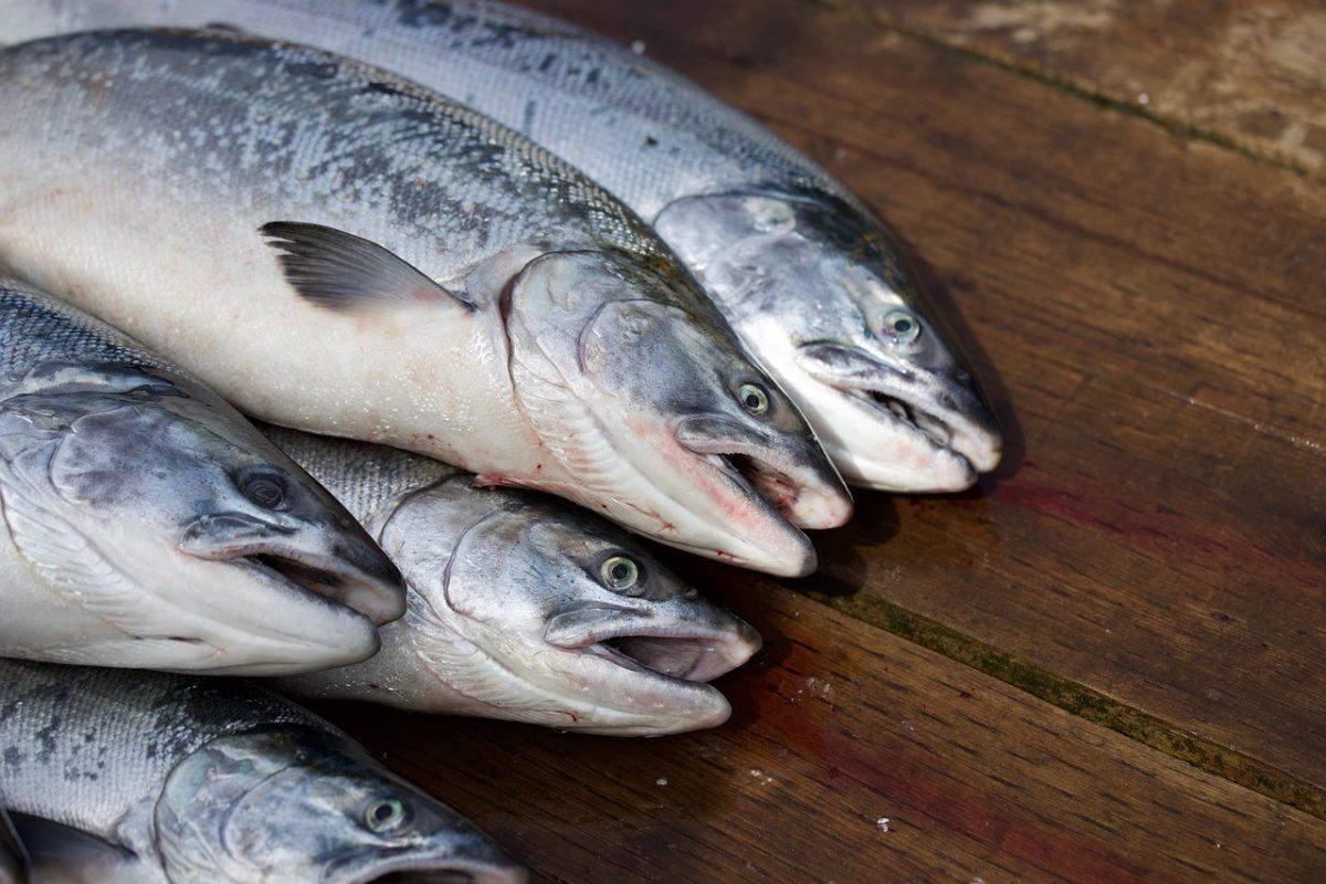 秋の味覚を釣って味わおう!鮭釣りの基礎知識と注意すべき禁止事項をご紹介