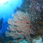 【保存版】沖縄ダイビングまとめ!南大東島のダイビングポイント