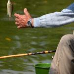 ヘラブナ釣りをスマートに!美しさと実用性を備えたおすすめヘラ竿10選