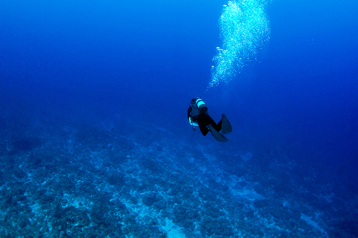 久米島 ダイビング