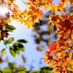 北海道の紅葉はニセコで楽しもう!一度は見たいニセコ周辺のおすすめ紅葉スポット