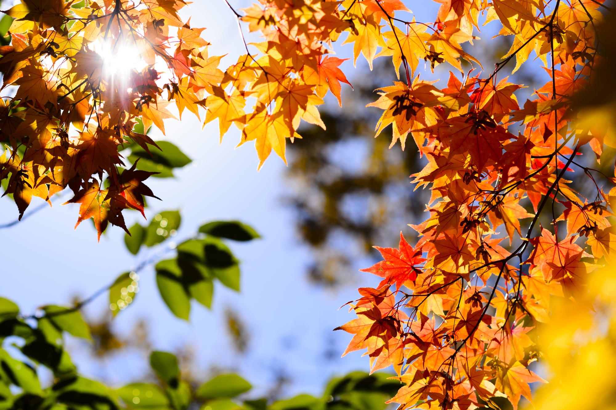 北海道 ニセコ 紅葉