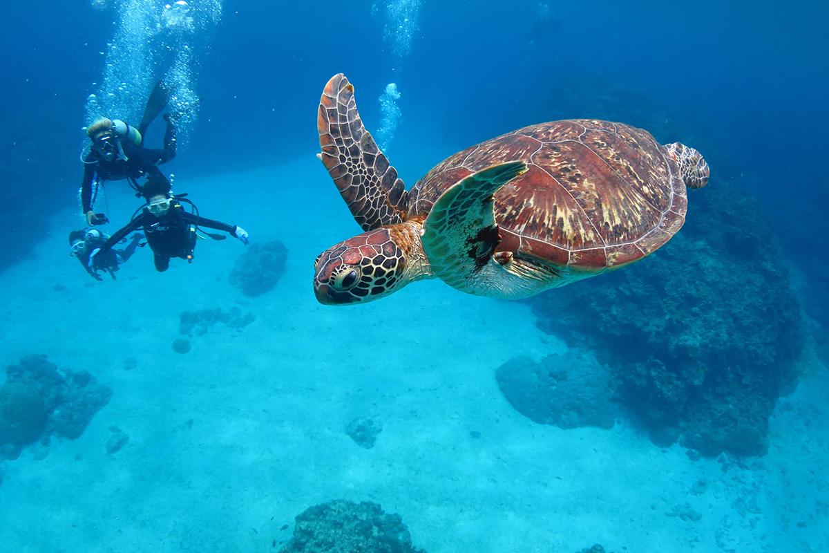 【保存版】沖縄ダイビングまとめ!ケラマ諸島のダイビングポイント15選