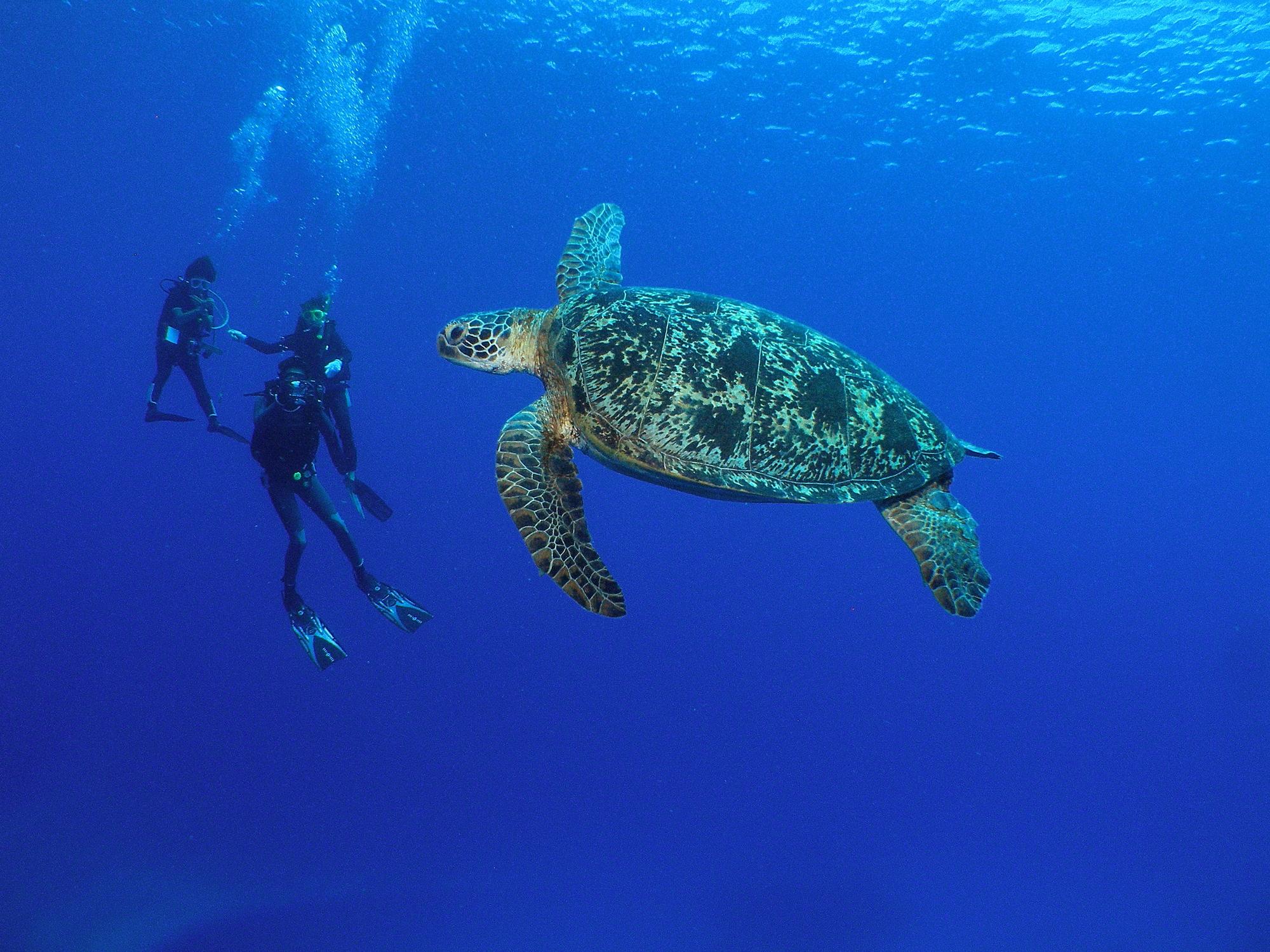 【保存版】沖縄ダイビングまとめ!渡名喜島のダイビングポイントをご紹介