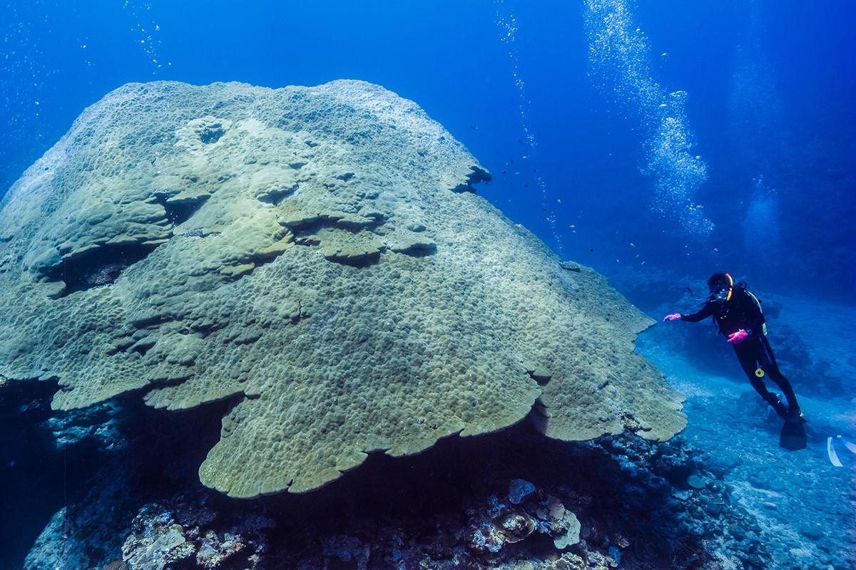 【保存版】沖縄ダイビングまとめ!伊江島のおすすめダイビングポイント