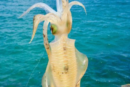 イカ釣り初心者は秋イカが狙い目!イカ釣りの基本と秋イカが狙い目な理由をご紹介