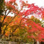 【2019年】人気度は県内一との呼び名も高い筑波山の紅葉スポット