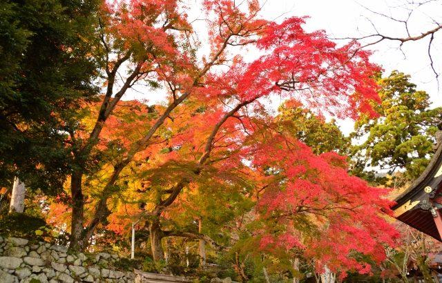 筑波山の紅葉スポット
