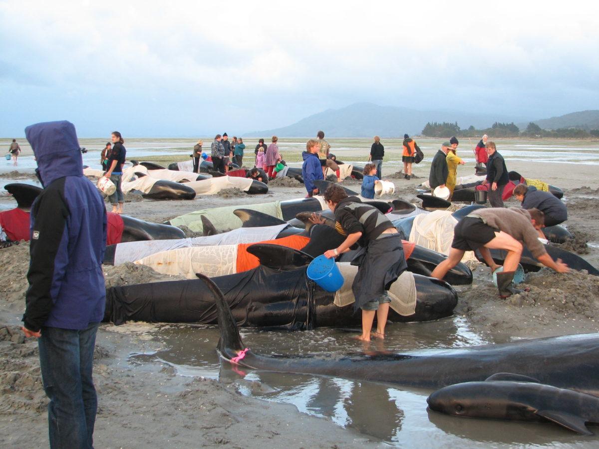 クジラ イルカ