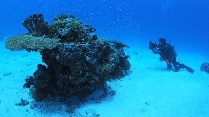 【保存版】沖縄ダイビングまとめ!西表島のダイビングポイント10選