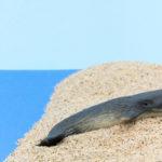打ち上げられた座礁クジラやイルカを見つけた時、私たちにできることは?