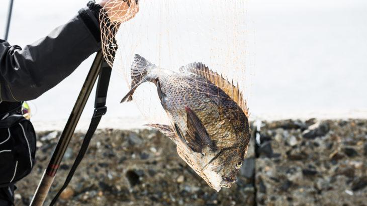 クロダイ釣りの伝統釣法!ヘチ釣りでの釣り方やヘチ釣りタックルを徹底解説