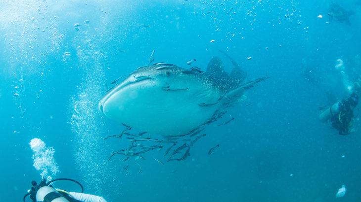 タオ島のダイビングが熱い!タイの海にハマるダイバーが続出中