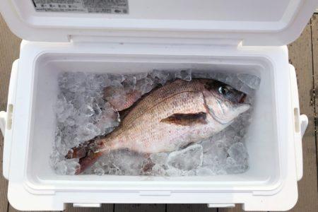 釣りに欠かせないクーラーボックスの選び方とおすすめ商品をご紹介