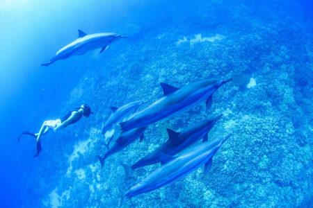 ドルフィンスイムを楽しもう!野生のイルカと泳げるおすすめスポット
