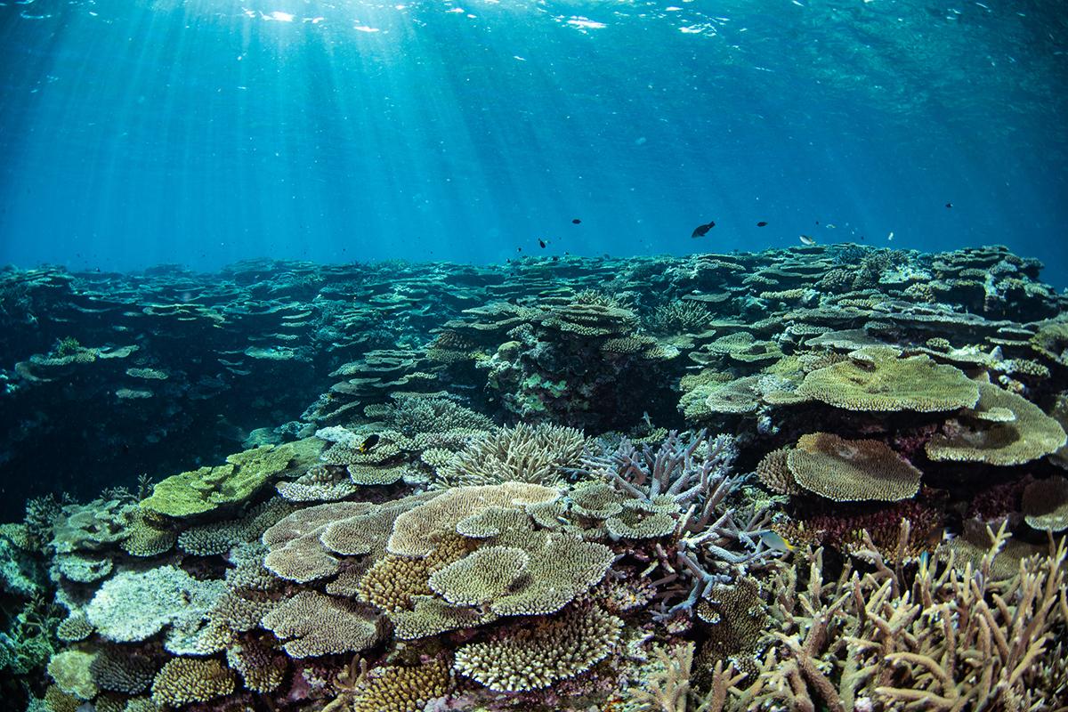 サンゴ ハワイ
