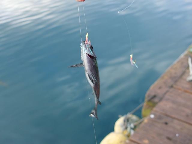 防波堤釣り 親子 釣り