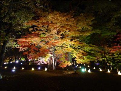 Outdoor Park 国営武蔵丘陵森林公園