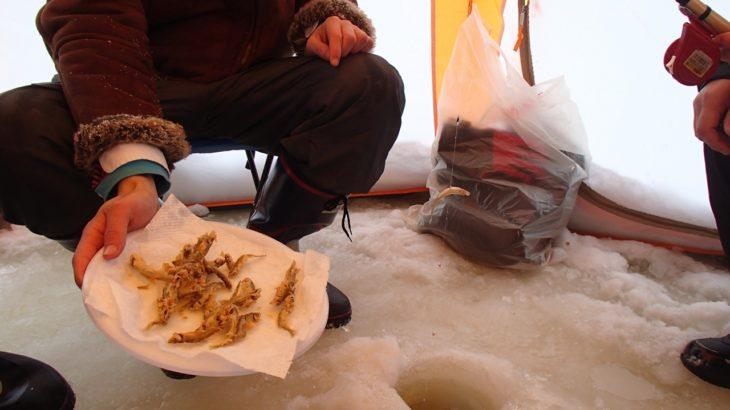【ワカサギ釣り】初心者でも釣れる!これから旬のワカサギ釣りのグッズ10選