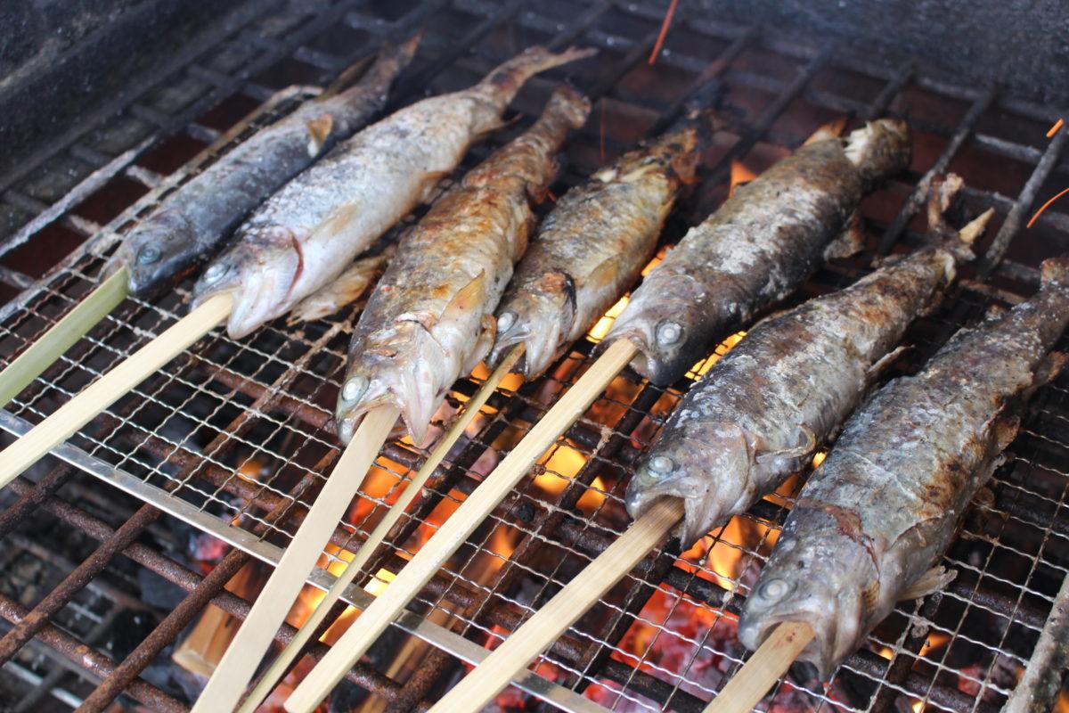 長井海の手公園 ソレイユの丘 ニジマス釣り