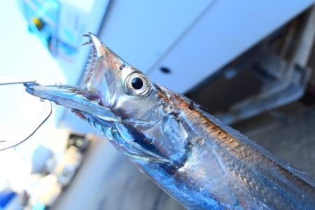 仕掛けを制するものは太刀魚を制す!太刀魚釣り用仕掛けの特徴を徹底解説