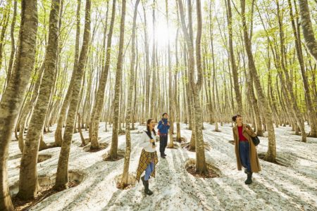 奥入瀬渓流ホテル 雪解けと新緑の森を散策するアクティビティ 「春の根びらきさんぽ」新登場