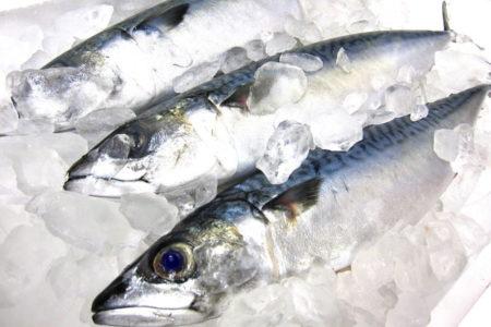釣った魚は血抜きが必須!適切な血抜きの方法を覚えよう!【海釣り編】