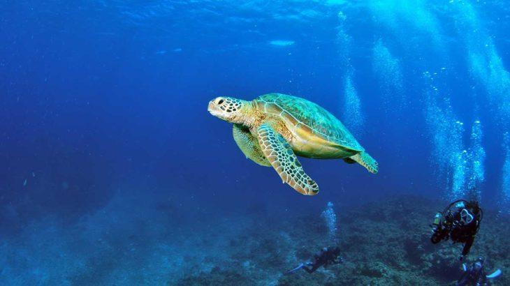 徳之島は知る人ぞ知る穴場のダイビングスポット!未開の海へ潜りに行こう