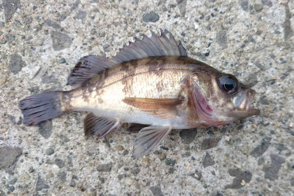 春の堤防釣り