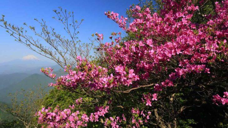 【2020関東編】春登山は花がきれいな山へ行こう!初心者でも楽しめる山