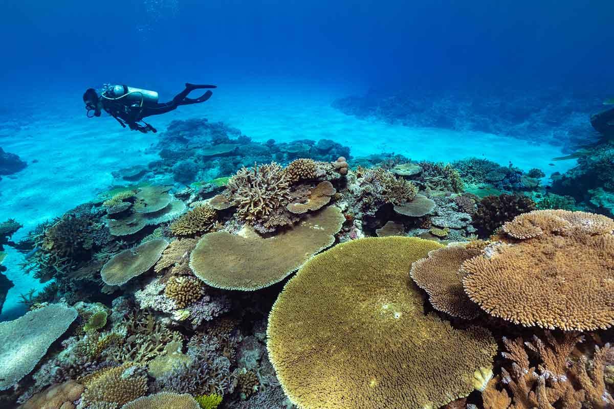 ダイビング 沖縄旅行