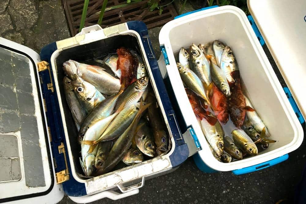 潮汐(ちょうせき)海釣り