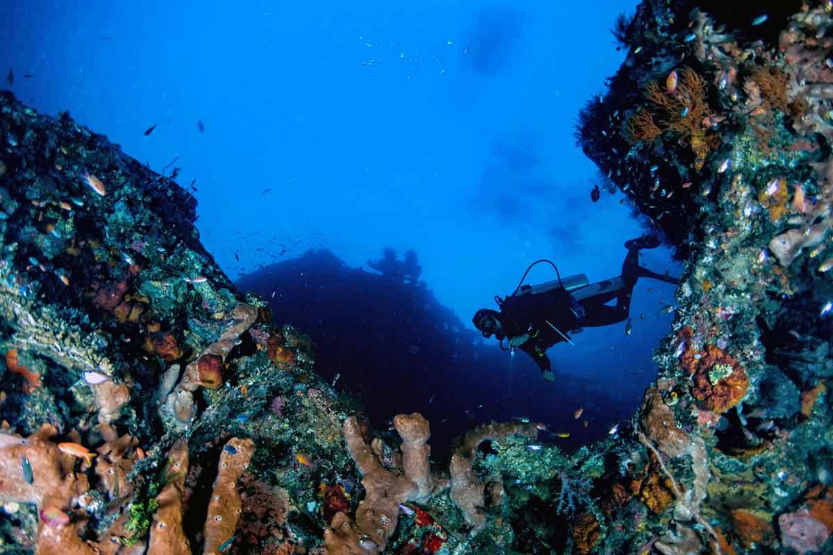 ウミウシ ダイビング