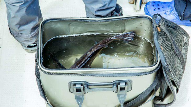 鮮度重視ならエアーポンプが大切!釣りに使えるエアーポンプの選び方・使い方