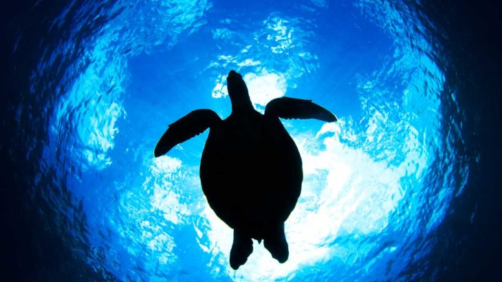ウミガメに会いたい!日本国内でウミガメに会えるダイビングスポット