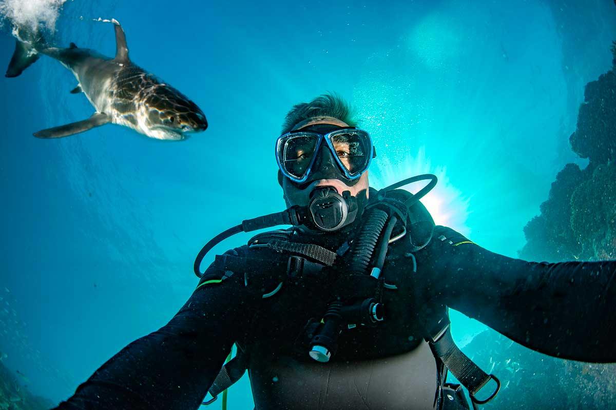 ダイビング サメ
